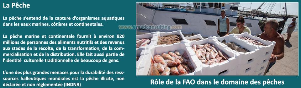 EMAD Consulting, Pêche et Aquaculture - Services et Ingénierie